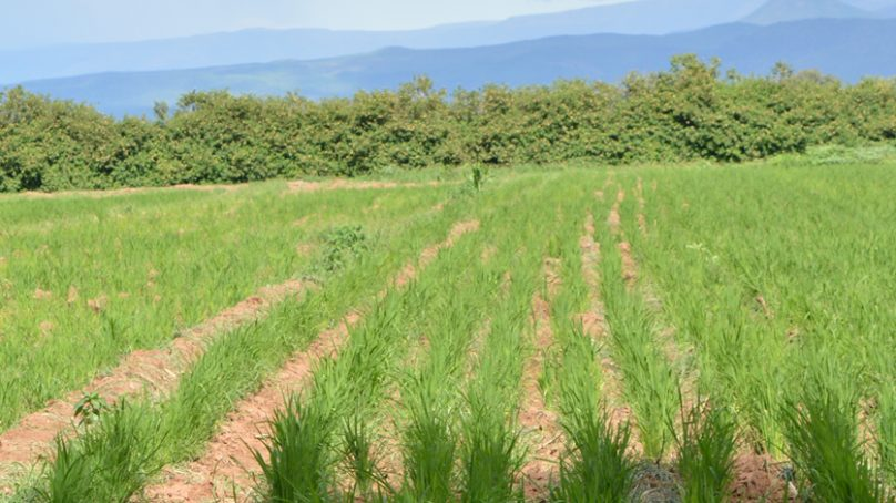 Food security: Arid Baringo has high potential for irrigated farming