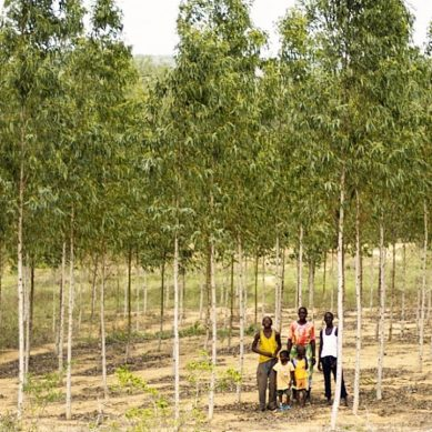Farmers at Kenyan coast take tree farming to supply raw material to new factory
