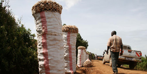 Potato farmers embrace tissue culture to increase output, minimise disease