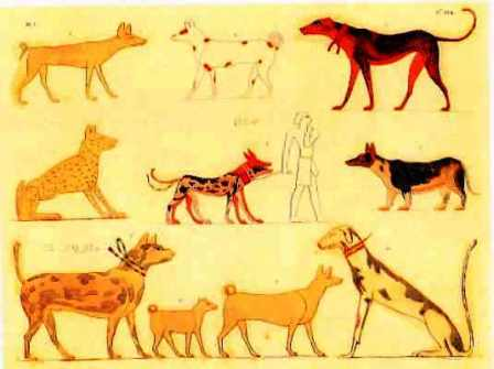 Ancient dog DNA reveals 11,000 years of canine evolution