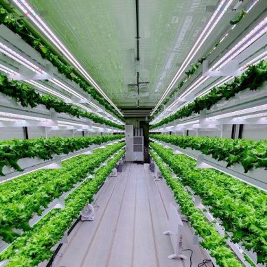 Ambitious Abu Dhabi to build world's largest indoor farm