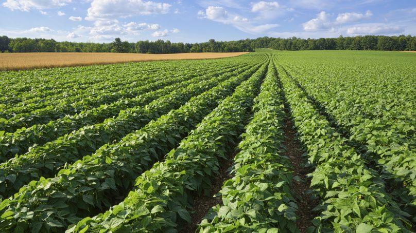 Market oriented horticultural smallholder farmers hit it big