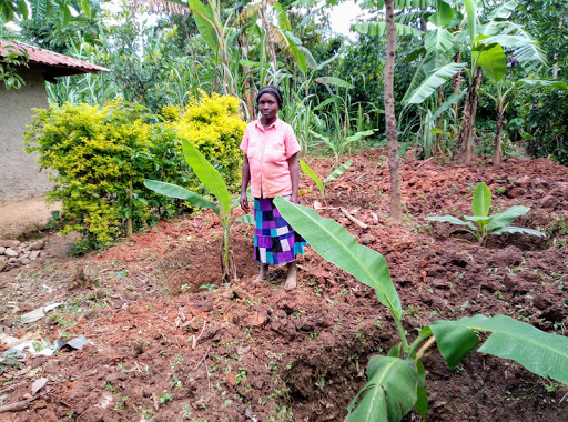 $170,000 banana, potato factory puts money in pockets of Kakamega youths