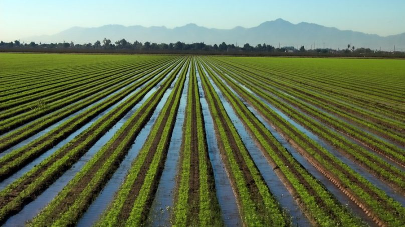 Crop irrigation: How dirty water is making us sick