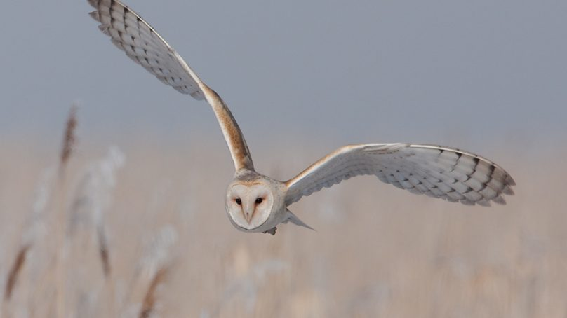 Scientist: It will be a while before engineers identify source of noise in owl aviation