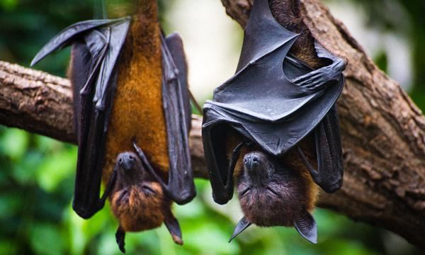 Coronavirus origin: 'Without it, we are flying blind'