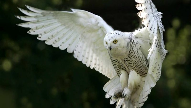 How stealthy owls inspired the design of silent flights