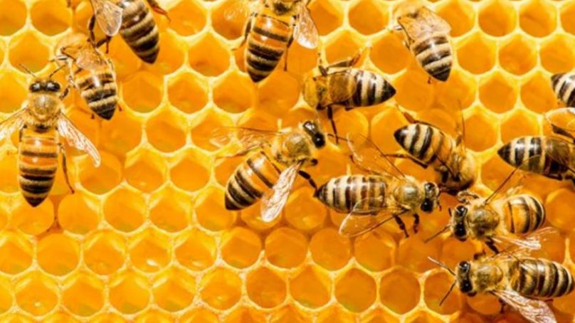 Honey laundering is one of the mega food trades in the world today