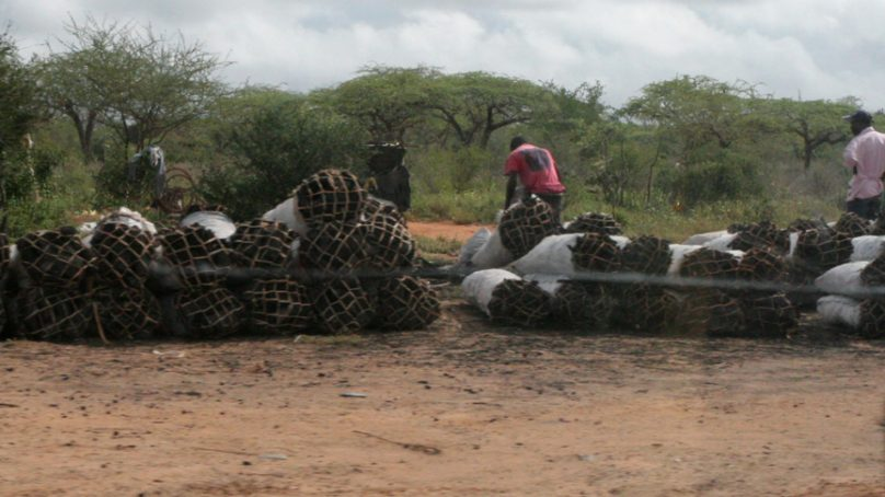 Grey market: Incentive to produce charcoal illicitly or legally set to rise in Kenya