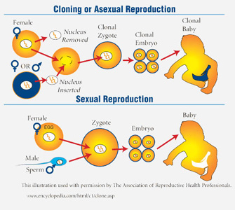 How sex creates variation: Mix and match that results in the next generation