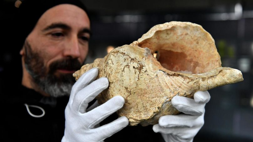 World's oldest music tool: How early artistes modified conch shell into a 'flute