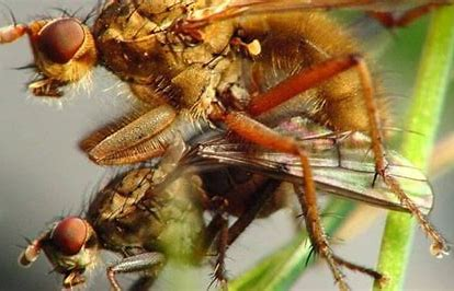 Promiscuity: Insects, birds are as fiercely protective and jealous as humans