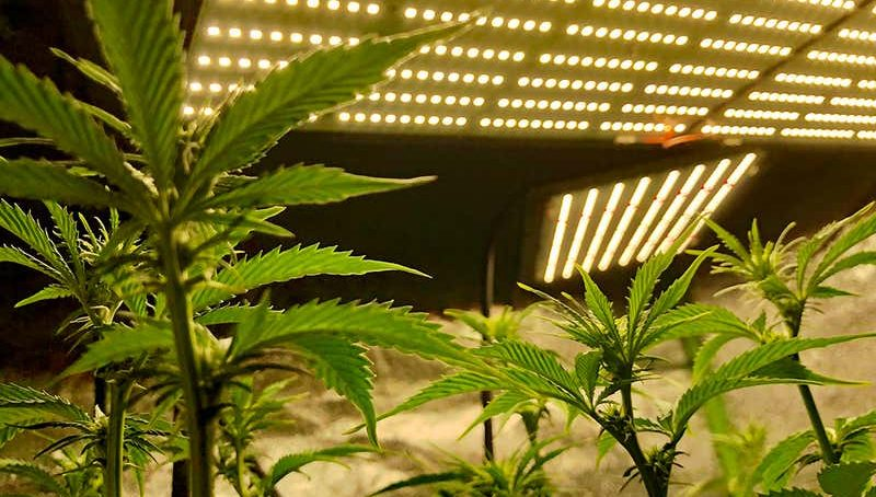 Holy weed: Colorado cannabis farms puff out more gases than coal mines
