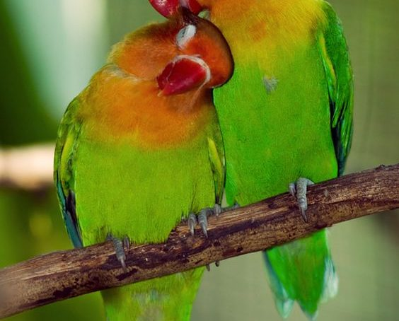 Species that often mate outside a bonded pair produce larger and faster seeds – research