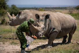 Wildlife conservation goes nuclear as endangered African rhino project is launched
