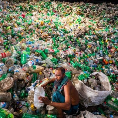 Scientists discover fungus and bacteria that can 'eat' up and break down plastics