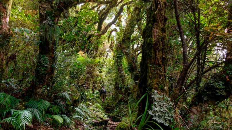 Bleak future: Biodiversity is not in decline, what's changing rapidly are ecosystems
