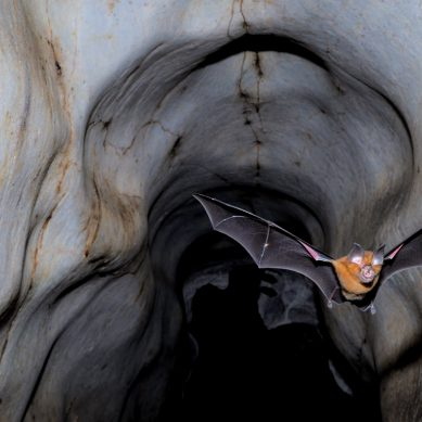 Scientists warn the world should brace for more coronavirus-like infections as others emerge from bats