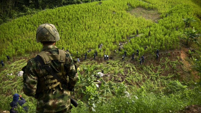 Five years on Colombia's coca regions remain at war, narcotics trade rebuilding and distrust is growing
