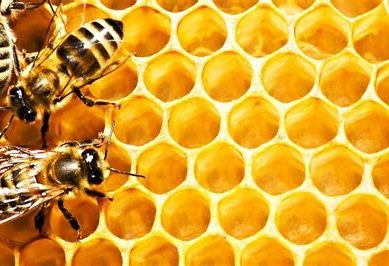 Super food: Offer a sick bee different variety of honey, it'll choose one that best fights off its infection